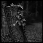 nature_005