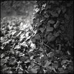 nature_015