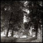 nature_025